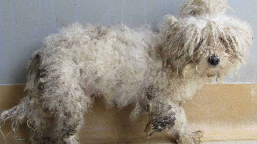 ISPCA, Gardai and Local Authority shut down puppy farm...