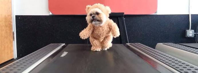 The Internet is crazy about a puppy in a teddy bear...