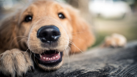 Your Dog's Dental Health