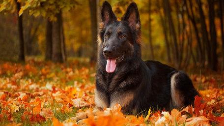 Do restricted breeds of dog make for more dangerous pets?