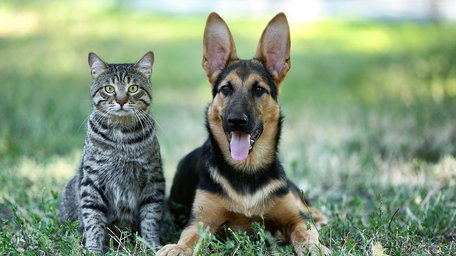 Are our pets probiotic?