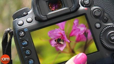 Camera Club 'Garden Fun'
