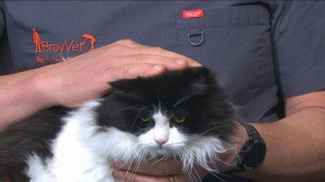 Arthritis in pets