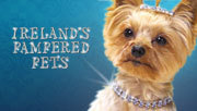 3player | Ireland's Pampered Pets, 23/03/2013. Documentary examining the extraordinary ways in which pet owners behave to ensure that their animals get the best possible care and attention.