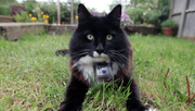 3player | The Secret Life of a Cat, 31/08/2014. This programme discovers what your cat really gets up to as 50 cats from a village in Surrey are tagged with GPS collars and their every movement is recorded